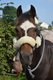 Chouette petit poney polyvalent