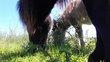 Anniversaire à dos de poney