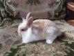 Diponibles de suite 2 manifique petits lapins...