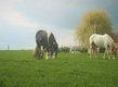 Pension pour poneys ou doubles poneys à...