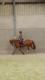 [cherche] cavalier(e) pour jument sbs sur Mons