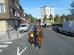 Chouettes chevaux à la re[cherche] de cavaliers