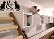 Nouvelle pension pour chats entre Liège et...