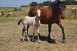 Yeguada Ostentosa elevage de chevaux PRE