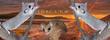 Loir pygmée africain