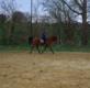 Recherche cheval à monter