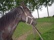 Votre cheval à la ferme