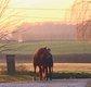 Tier pension à Eizer, pour amateur équitation...