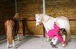 Pension cheval et poney