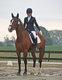 Je [cherche] une pension pour mon cheval