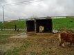 Caisses de camion pour poneys