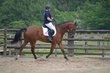 Demi pension sur cheval polyvalent