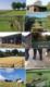 Colocation Prairie - troupeau de 5 chevaux -...