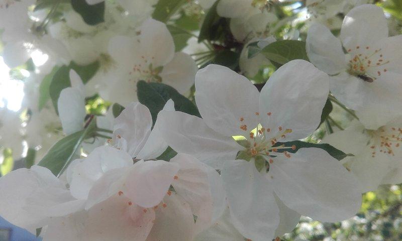 Loisirs Balade Champetre Fleurs Bach