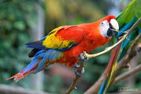 Ontspanning Papegaaien-opvang