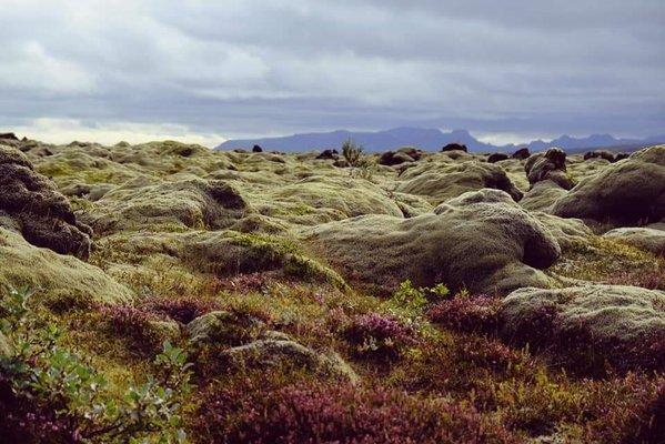 Expositions L Islande Entre Terre Mer - Laurence Burvenich