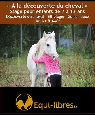Stages,cours A découverte cheval: rencontre - éthologie - soins- jeux