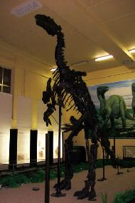 Expositions Musée l iguanodon