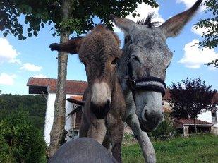 Loisirs Balade avec âne