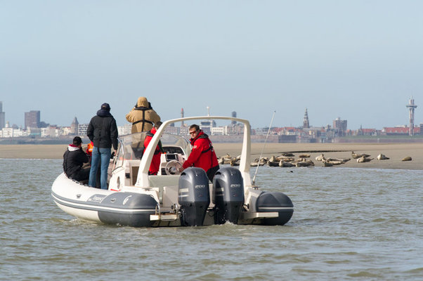 Ontspanning Zeehonden Discovery