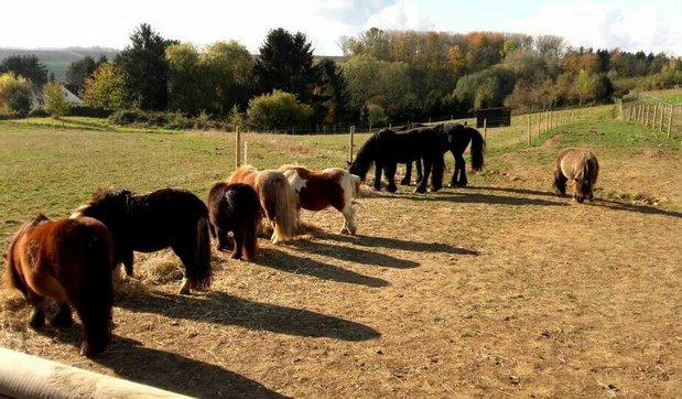 Loisirs Mon petit poney - little pony