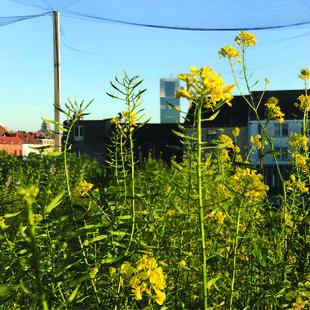 Loisirs Une visite la ferme urbaine