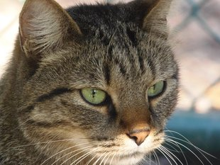 Loisirs Venez rencontrer adopter) chats CatRescue
