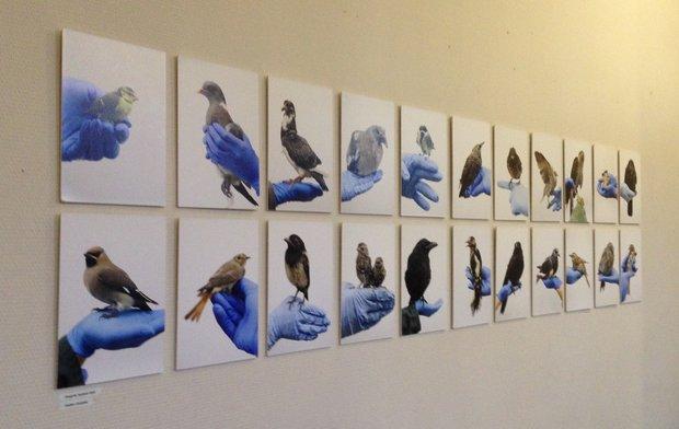 Tentoonstellingen Vogels huilen niet - Anjès Gesink