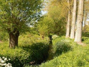 Loisirs 10 déjà pour Réserve Naturelle Agréée Vogelzangbeek