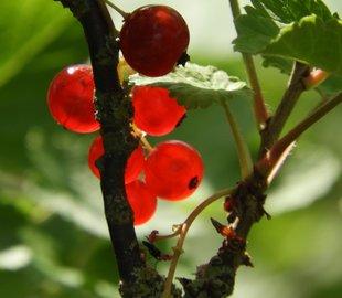 Stages,cours Cueillir cuisiner plantes sauvages, avec Vinciane Graulich, l'asbl Jar