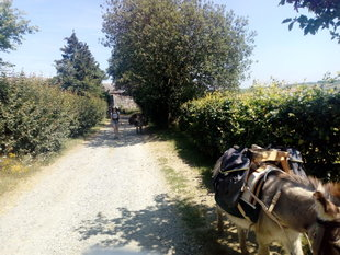 Loisirs Promenades randonnées touristiques avec ânes