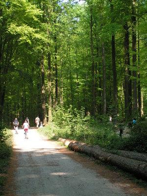 Loisirs Balade printemps forêt Soignes