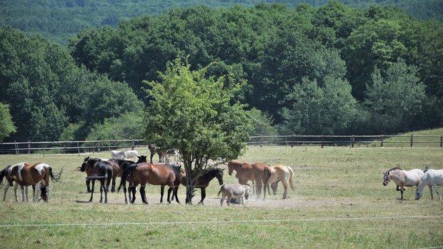 Loisirs 100 Chevaux l herbe , bien plus qu un refuge pour équidés