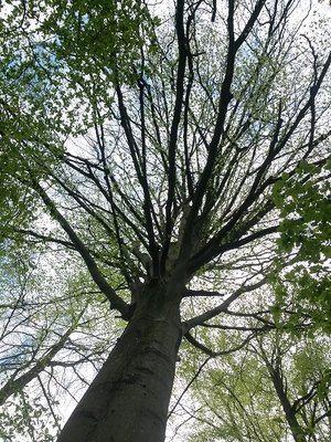 Loisirs Balade  Bain Forêt
