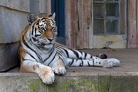 Loisirs Zoo d Anvers