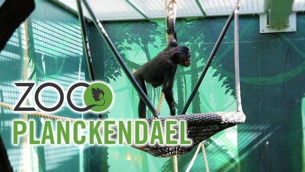 Loisirs Zoo Planckendael