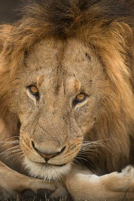Tentoonstellingen Ingrid Vekemans - Safari Afrikafotografie