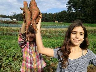 Loisirs Récolte légumes oeufs le champ