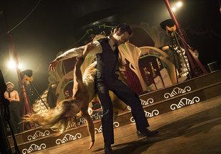 Voorstellingen Swing - Circus Ronaldo