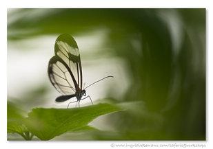 Workshops Workshop fotografie: Vlinders