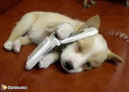 Gardiennage chiens