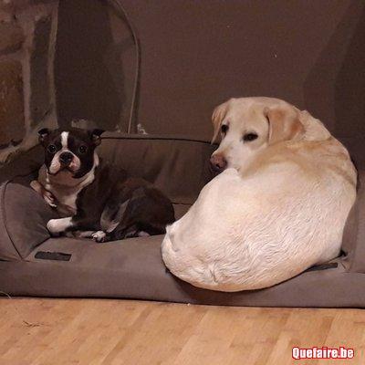 Pension familiale active pour votre chien
