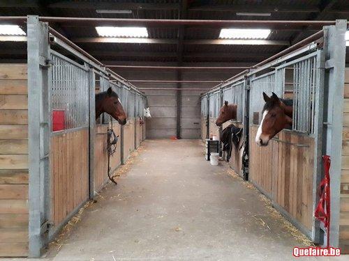 Pension pour chevaux et poneys