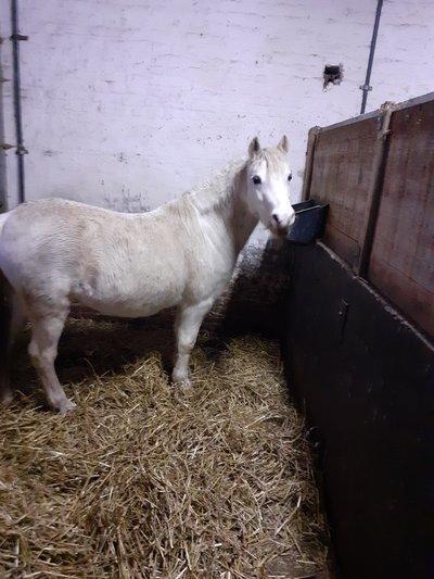 Pension pour poneys ou doubles poneys à Enines...