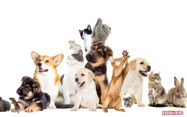 Soigner votre animal de compagnie naturellement